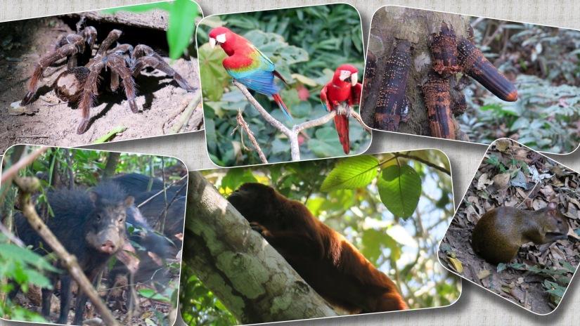 Rurrenabaque – TheJungle